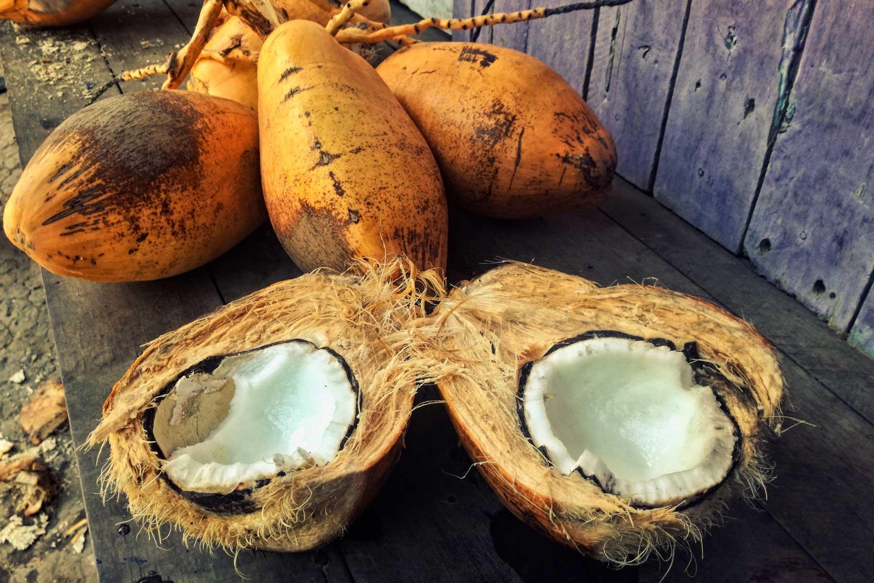 Coco flora del Perú