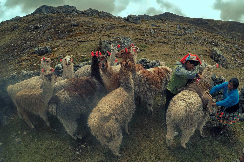 Tour Lares y Machu Picchu Trekking