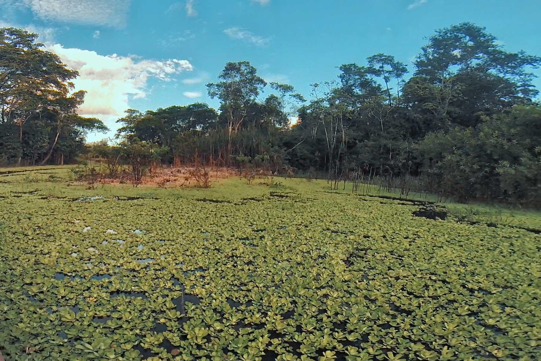 viaje al amazonas iquitos