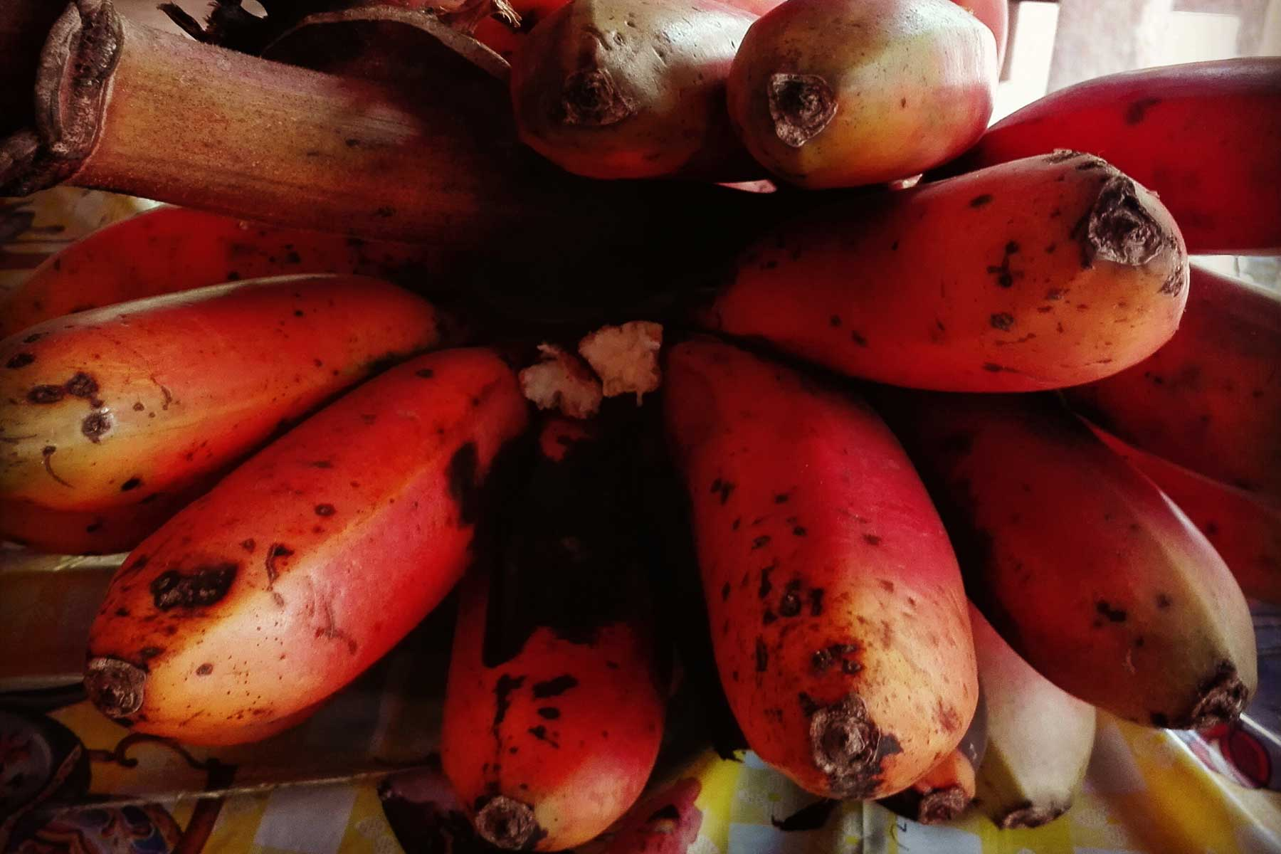 Platano rojo selva peru
