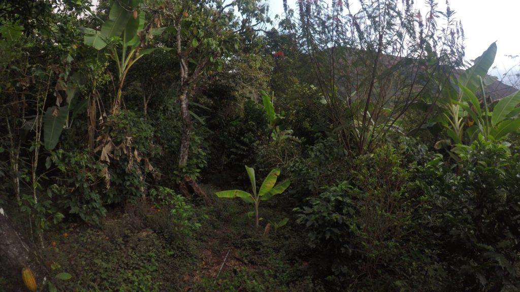 selva de peru