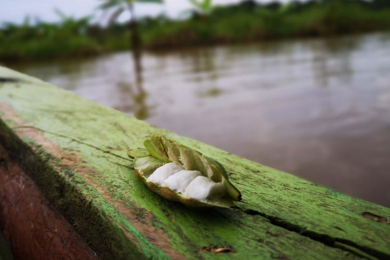 11frutas de la selva peruana